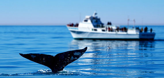 Things To Do in Monterey, California